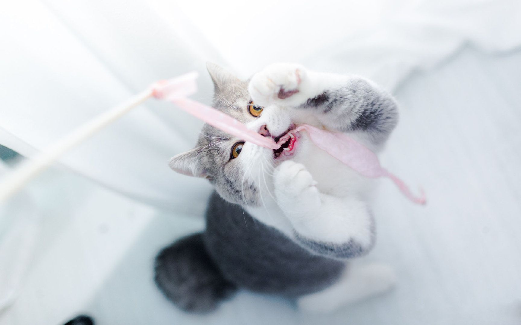 gogo人体艺术猫